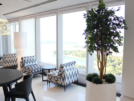 Low maintenance plants and trees for corporate offices