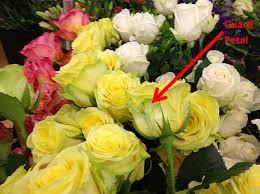Guard petals on roses