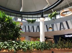 Interior landscape-suspended garden
