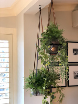 hanging plants with leather straps