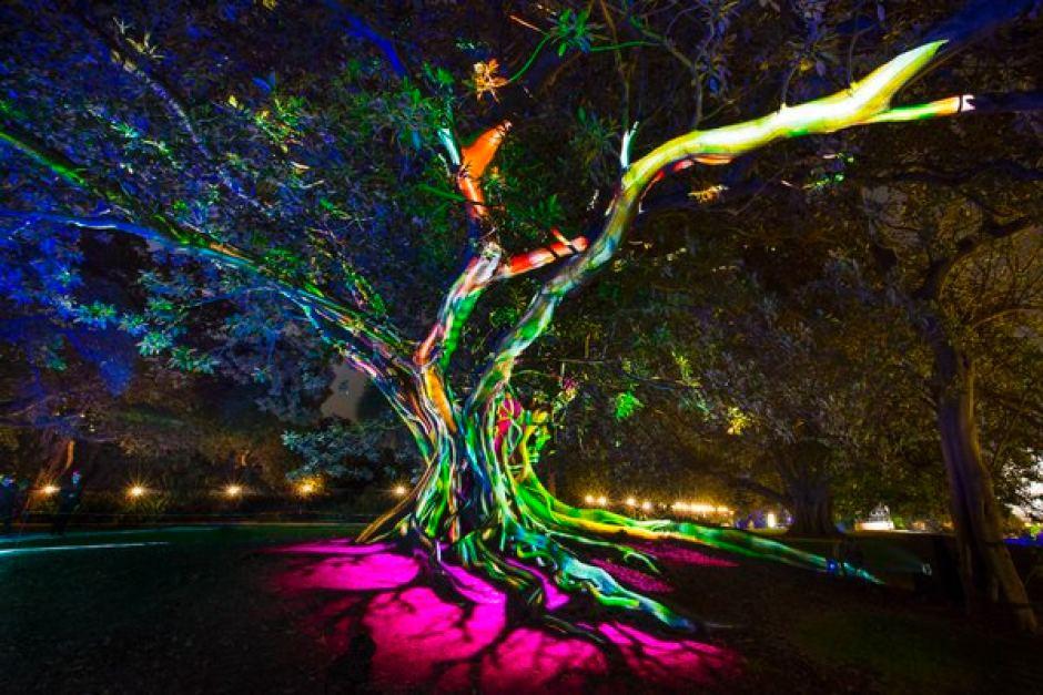 Vivid in the Botanic Gardens Sydney