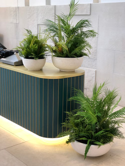 Tropical planting in pots