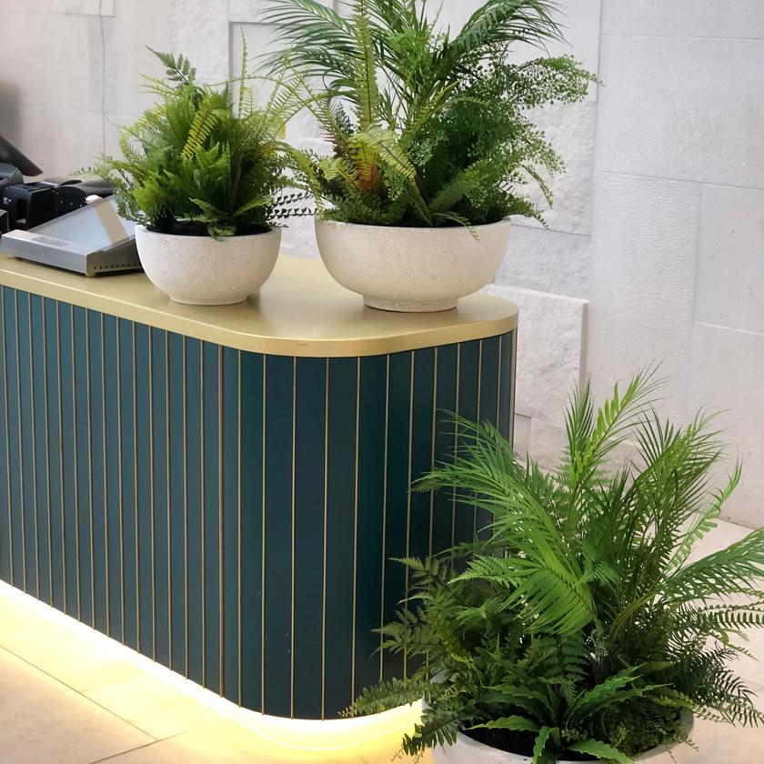 Potted Ferns - Soul Design