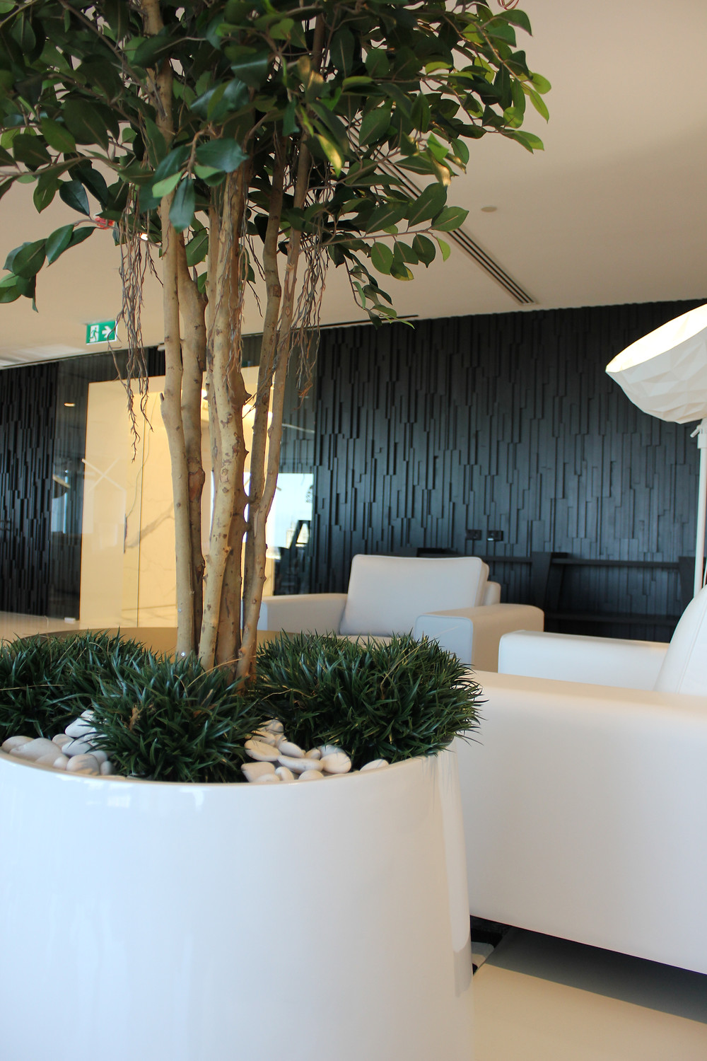 Artificial tree - ficus in white gloss pot with planted mondo grass