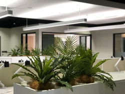 tropical plants in commercial office planter