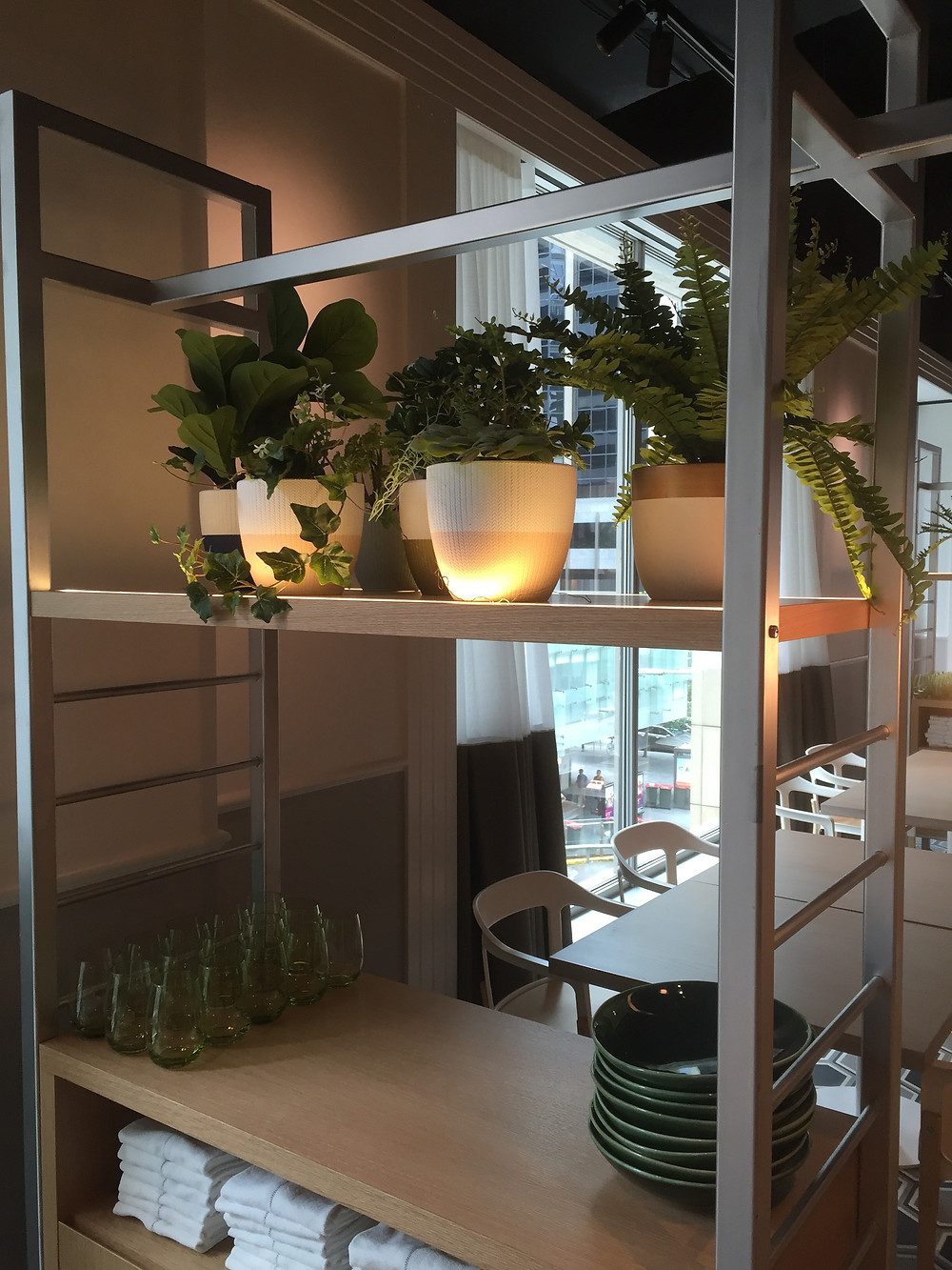 potted plants fiddle leaf and fern soften the setting of a Corporate Restaurant