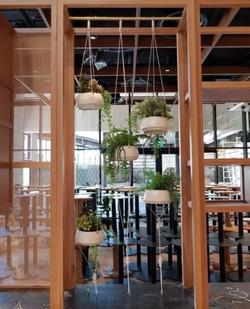 hanging plants hospitality