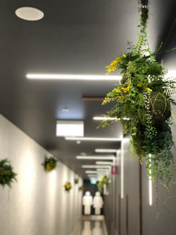 hanging earth balls with tropical plants and wattle in shopping centre