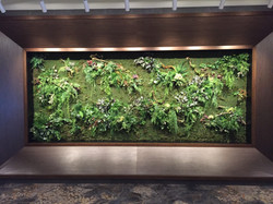 Artificial Green Wall feature