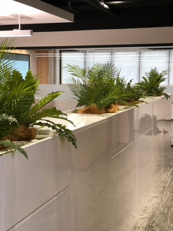 Office Planting tropical foliage
