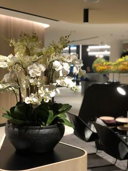 Corporate Phalaenopsis Orchid Design