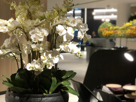 Interior Landscape Design Innovation for Aged Care