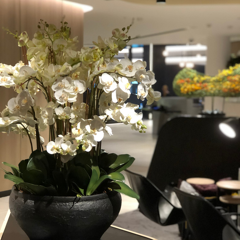 Phalaenopsis Orchid Arrangement - Soul Design