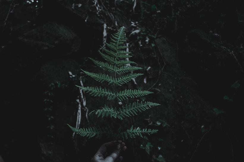 Sarah Hope - Microdose & Mindfulness Coa