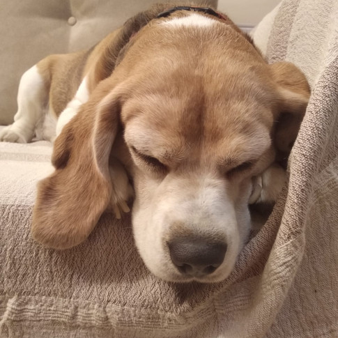 Hallo, ich bin der schlafende Vito