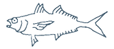 サカナグミ