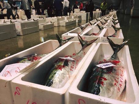 博多の風物詩「長浜市場の鰤競り」