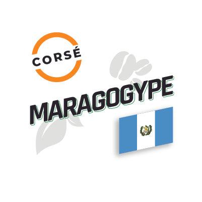 MARAGOGYPE Torréfaction Noire