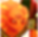 Bremis_Icon.png