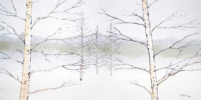NC-Snow Fog