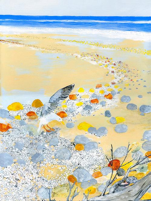 NC-Seagull Beach