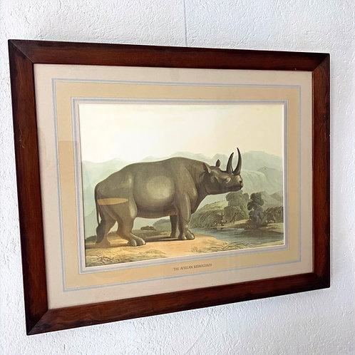 Chromolithographie animalière 19ème - THE AFRICAN RHINOCEROS
