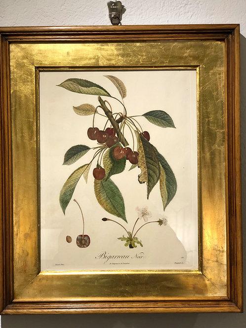 """Eau-forte """"BIGARREAU NOIR"""" datant de 1800"""