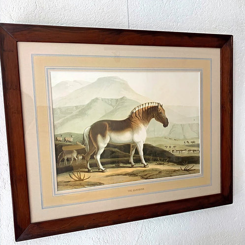 Chromolithographie animalière 19ème - THE QUAHKAH