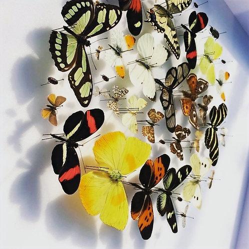 Composition circulaire de papillons et insectes, par Emillien BOUTEILLE