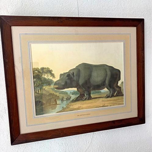 Chromolithographie animalière 19ème - THE HIPPOTAMUS