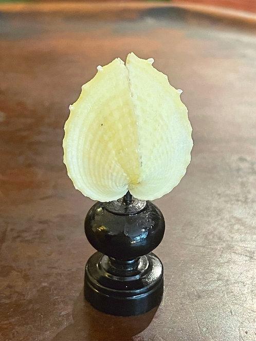 Corculum jaune