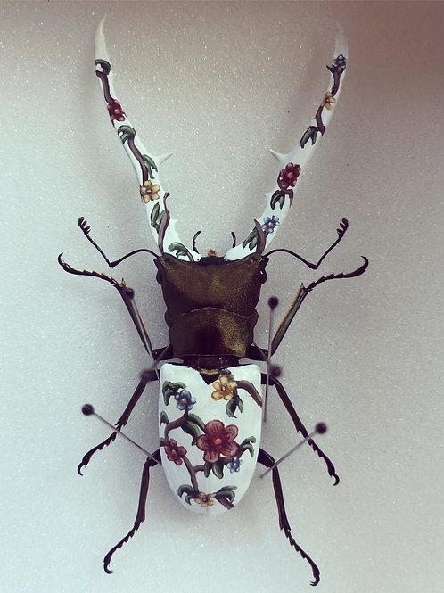 Cyclommalus metallifer, peint à la main - pièce unique
