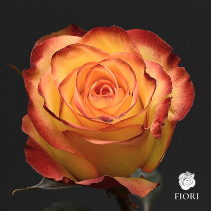 Ramo de rosas Alegría