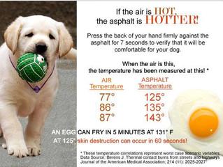 Hot Summer Asphalt and Your Pet