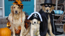 Tips for a Safe Halloween with Pets
