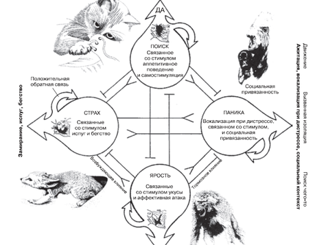 Эмоциональные системы мозга по Яаку Панксеппу