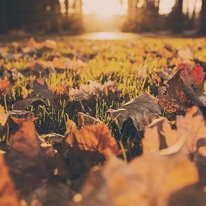Enseñanza para el otoño