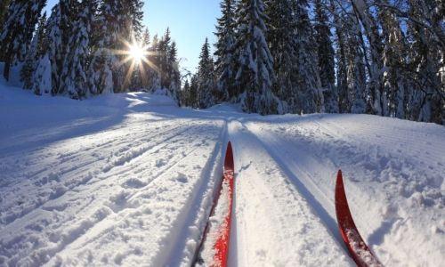cross country skis on trail.jpg