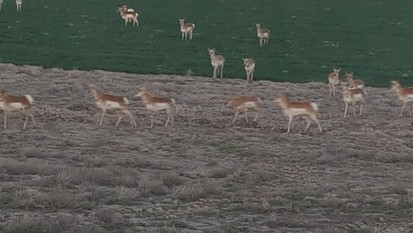 """Near our home """"where the deer and the antelope play"""""""