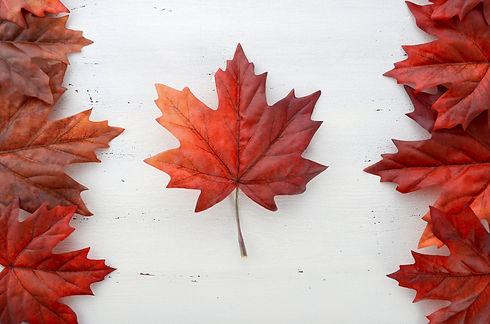 Happy Canada Day red silk leaves in shap