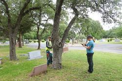 COA TreeSurveyGPSMarkingTree