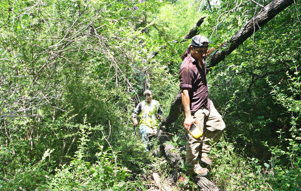 Survey team traverses thick woods