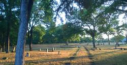 COA TreeSurveyPlummers