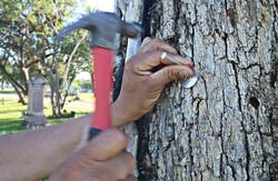 COA TreeSurveyTagging