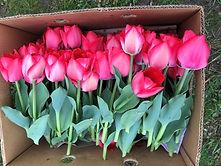 Tulpen im Karton_edited.jpg