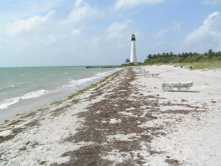 Beach Clean-up @ Bill Baggs Cape Florida State Park Saturday, August 10, 2019