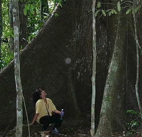 Amazon jungle sacred tree guide