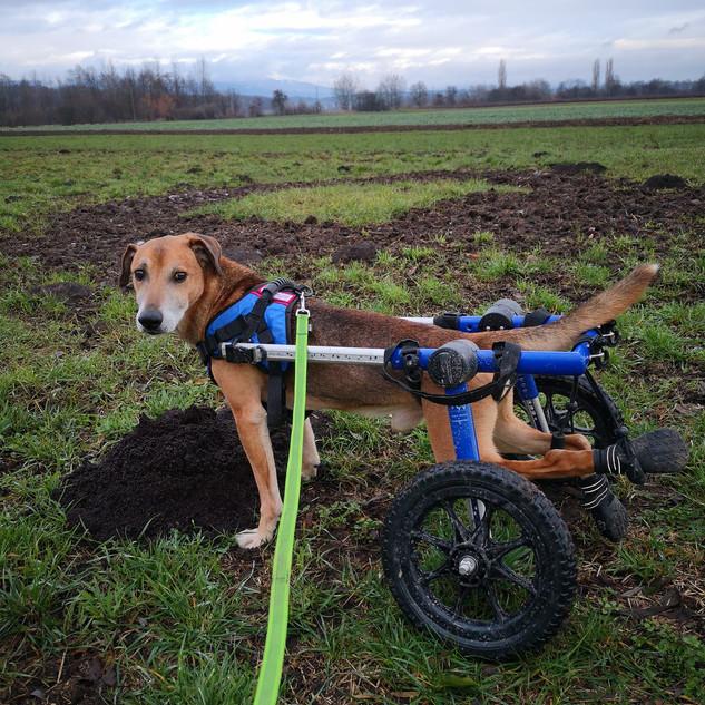 Rollin'dog Benni.jpg