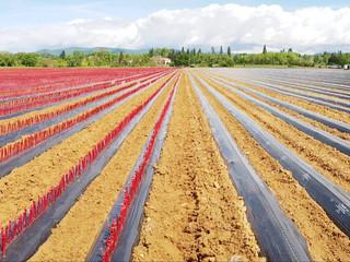 Plantation de la pépinière 2021-2022 en cours