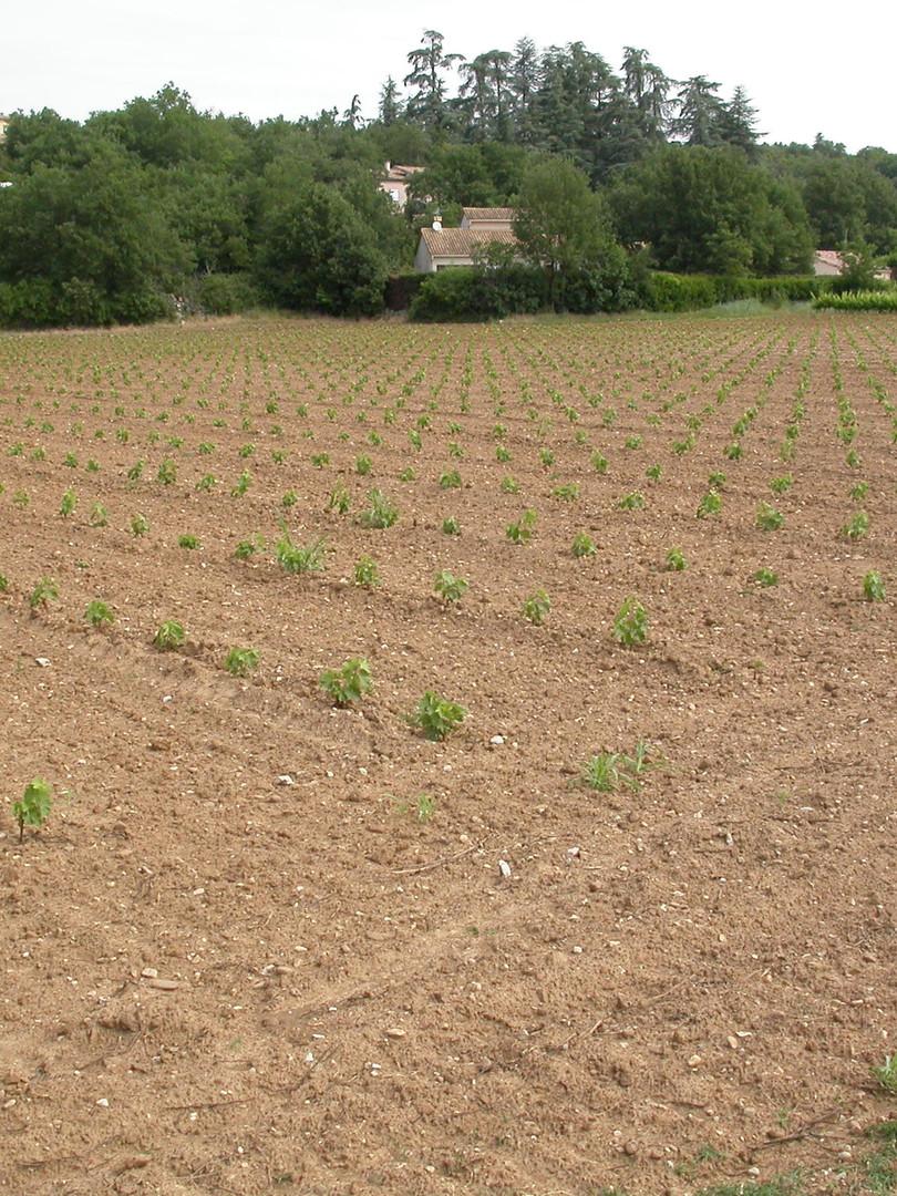 Plantier-StAlban_2011-Mai.JPG